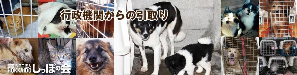 札幌 犬 里親